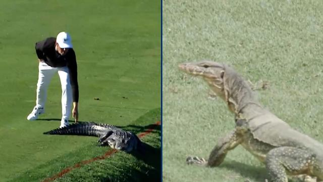 PGA TOUR | Gators. Snakes. Dragons?! Best reptile encounters on PGA TOUR